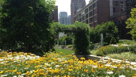 John Jay rooftop daisys
