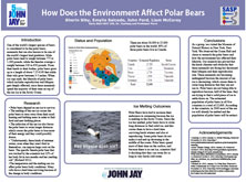 How Does the Environment Affect Polar Bears